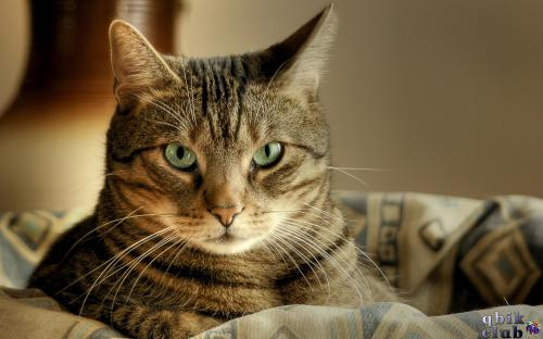 Видят ли кошки в темноте и как
